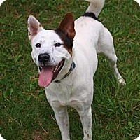 Adopt A Pet :: Spud - Toronto/Etobicoke/GTA, ON