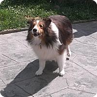 Adopt A Pet :: Kaylee PENDING - Abingdon, MD