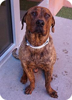 Shepherd (Unknown Type) Mix Dog for adoption in Farmington, New Mexico - Odie