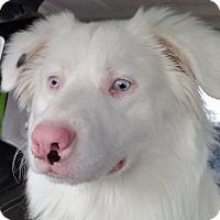 Adopt A Pet :: ROMEO - pending adoption - Post Falls, ID