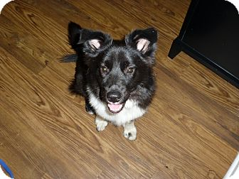 Border Collie Mix Dog for adoption in Austin, Texas - Rookie