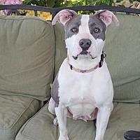 Adopt A Pet :: Lisa - Toluca Lake, CA