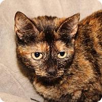 Adopt A Pet :: Tabitha - Helotes, TX