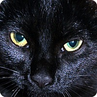 Adopt A Pet :: Lucky - Denton, TX