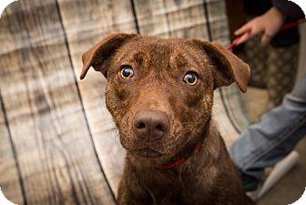 Mixed Breed (Medium) Mix Dog for adoption in Austin, Arkansas - Bindi