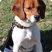 Adopt A Pet :: Heidi - Nicholasville, KY