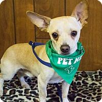 Adopt A Pet :: Lucky - Tavares, FL