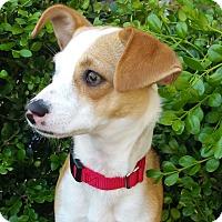 Adopt A Pet :: Crystal-ADOPTION PENDING - Bridgeton, MO
