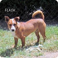 Adopt A Pet :: Flash - Lindsay, CA