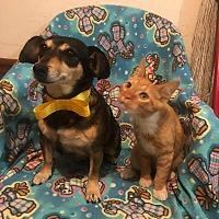 Adopt A Pet :: TYTY - San Ysidro, CA