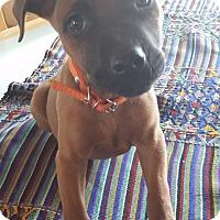 Adopt A Pet :: Ruby Tuesday - San Diego, CA