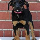 Adopt A Pet :: Brenda