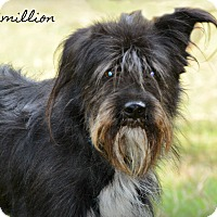 Adopt A Pet :: Maximillon - Glastonbury, CT