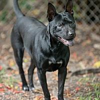 Adopt A Pet :: Marty - Key Biscayne, FL