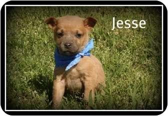 Labrador Retriever/Husky Mix Puppy for adoption in Cranford, New Jersey - Jesse