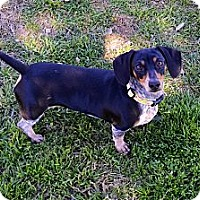 Adopt A Pet :: Pepper - Bryan, TX