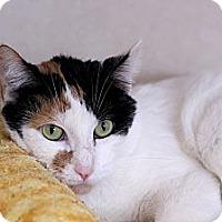Adopt A Pet :: Porcelain - Chicago, IL