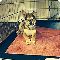 Adopt A Pet :: Titan - Westminster, CO