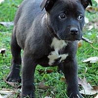 Adopt A Pet :: Ainsworth - Staunton, VA