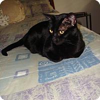 Adopt A Pet :: BeBee - Laguna Woods, CA
