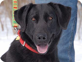 Labrador Retriever Mix Dog for adoption in Cincinnati, Ohio - Posie