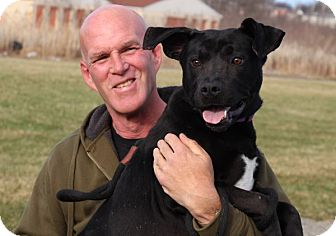Labrador Retriever Mix Dog for adoption in Elyria, Ohio - Sam