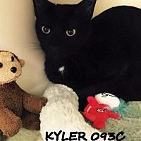 Adopt A Pet :: Kyler - Spring, TX