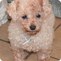 Adopt A Pet :: Annalee - Prole, IA