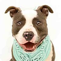 Adopt A Pet :: POPUP - Orlando, FL