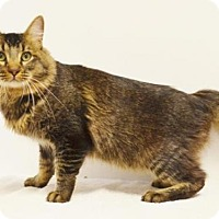 Adopt A Pet :: *BOB - Sacramento, CA