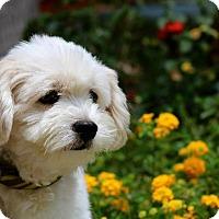 Adopt A Pet :: Kira - El Cajon, CA
