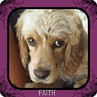 Adopt A Pet :: Faith - Santa Barbara, CA