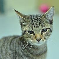 Adopt A Pet :: 10312092 - Brooksville, FL