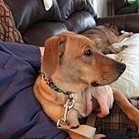 Adopt A Pet :: Harley - Tuckerton, NJ