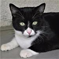 Adopt A Pet :: Violette - Canyon Country, CA