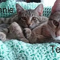 Adopt A Pet :: Annie and Tess - Fairmont, WV