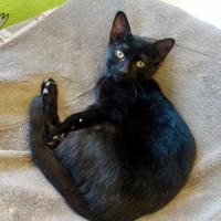 Adopt A Pet :: Merry - Westampton, NJ