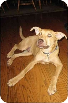 Terrier (Unknown Type, Medium) Mix Dog for adoption in Plainfield, Illinois - Rudy