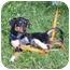 Photo 3 - Terrier (Unknown Type, Medium) Mix Puppy for adoption in Austin, Minnesota - Dundee