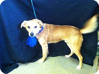Collie Mix Dog for adoption in Hazard, Kentucky - Shadow