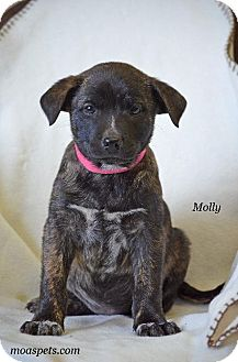 Terrier (Unknown Type, Small)/Boston Terrier Mix Dog for adoption in Danielsville, Georgia - Molly