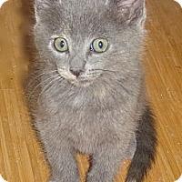 Adopt A Pet :: Miska - Escondido, CA