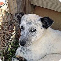 Adopt A Pet :: Dora - Marietta, GA