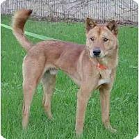 Adopt A Pet :: Dambee - Southern California, CA