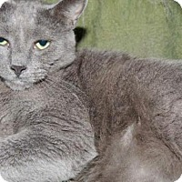 Adopt A Pet :: Mojo - Long Beach, WA