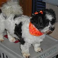 Adopt A Pet :: Cricket - Homer Glen, IL