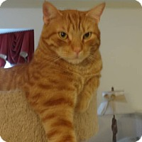 Adopt A Pet :: Pumpkin - Colmar, PA