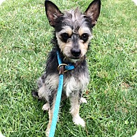 Adopt A Pet :: Draper - Mission Viejo, CA