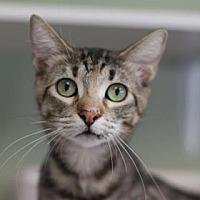 Adopt A Pet :: FLY - Kyle, TX
