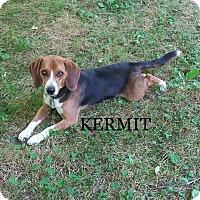 Adopt A Pet :: KERMIT - Ventnor City, NJ